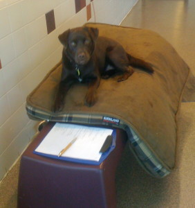 "The ultimate ""mat brat"", Copper jumped up on the bench in hopes of earning a click and treat!"