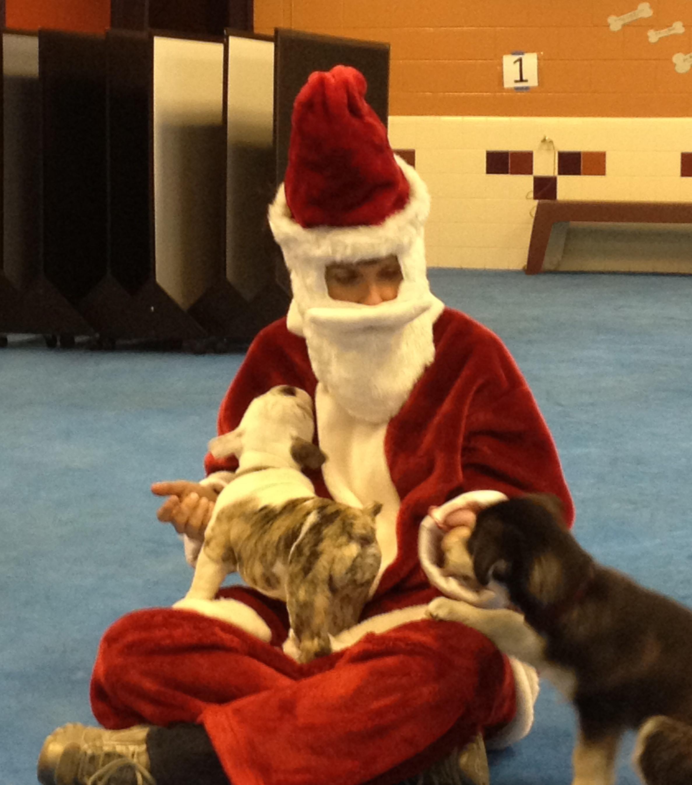 Good Dog Behavior Training Fort Collins